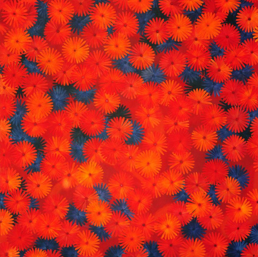 rootless/ orange/ acrylic on canvas/ 120 x 120 cm/ sold