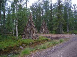 birch-sculpture in lapland