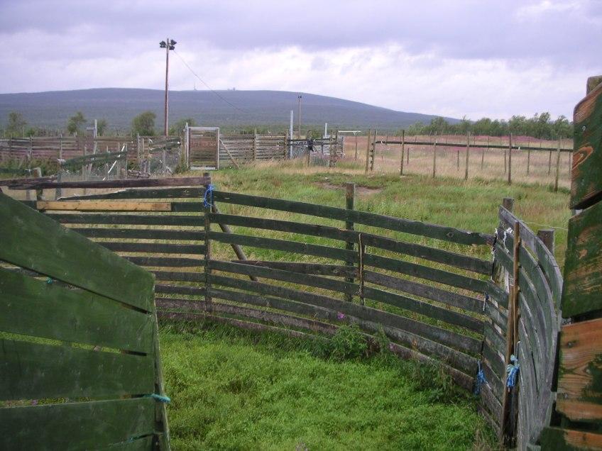 reindeer enclosure