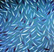 fishswarm turquoise