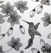 hummingbird, rapidograph