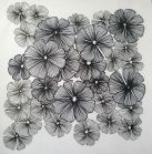flowers,  rapidograph